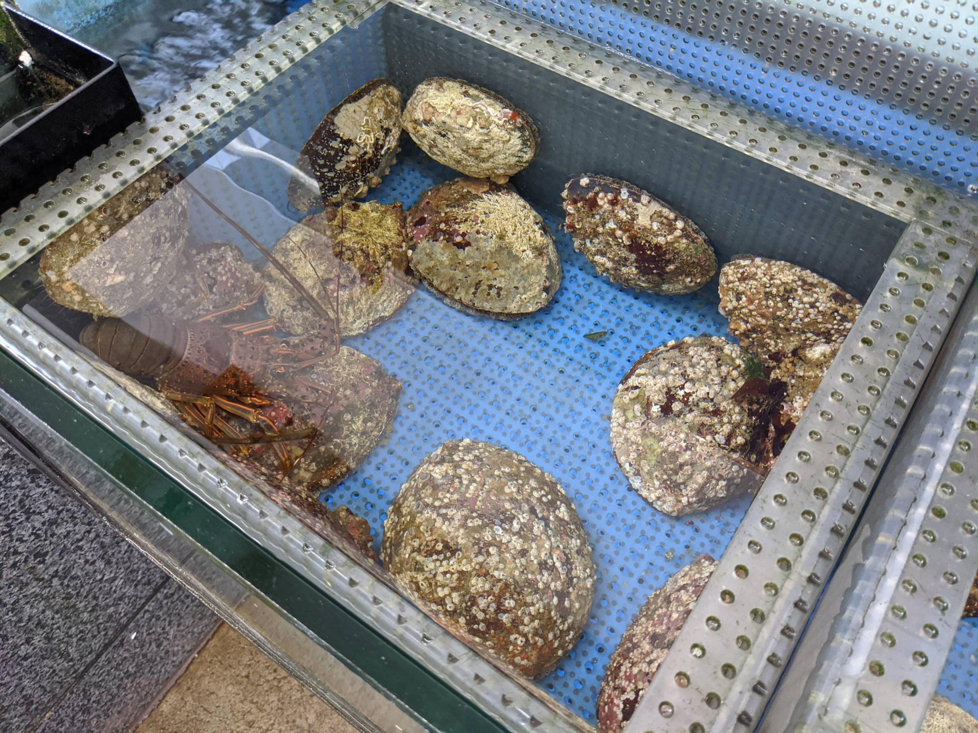 白鳥丸で売られているアワビ